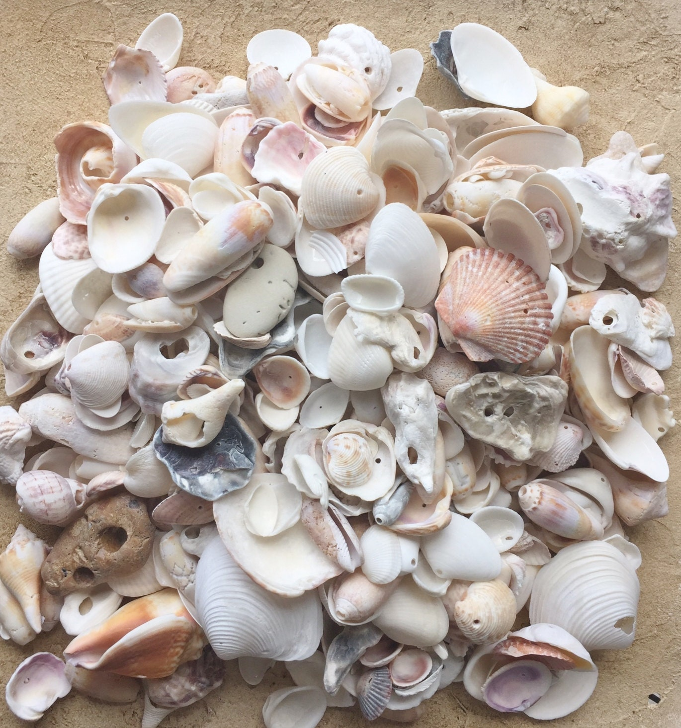 4 LB Bulk Craft Shells W/holes / Florida Seashells / Beach