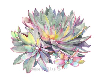 Succulent Print of watercolour painting - S0316 - 5 by 7 size smallest print - Botanical art - Succulent watercolor painting - print