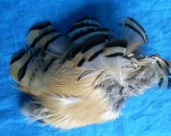 Chuckar feathers. More than 20 striped and many gray. #2