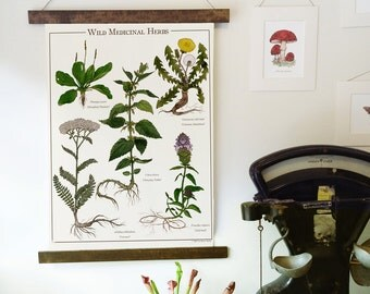 Wild Medicinal Herbs Canvas Wall Hanging - Botanical Illustration