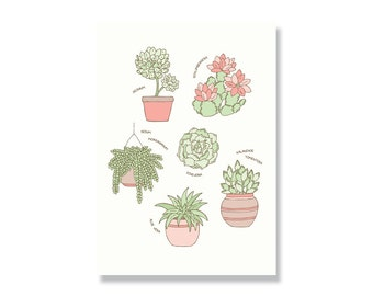 SALE Succulents A4 Illustration Print
