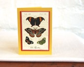 Butterfly Gift Tag Card Handmade Blank Natural History Note Card Vintage Stationery