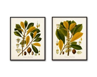 Flora No.2 Vintage Botanical Prints Giclee  Print Sets Wall Decor Antique Botanical Prints Kohler Botanicals Illustration Collage Wall Art