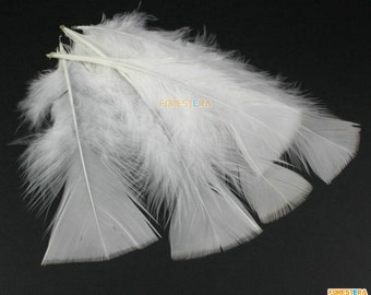 50 Pieces White  Feather 8-15cm (YM7)