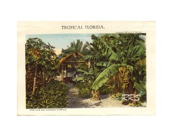 Digital Download Old Florida Vintage Postcard Early 1900's Tropical Bananas and Paw-Paw Trees
