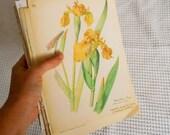 Vintage Diary of Edwardian Lady  Prints double sided Book Page Vintage Ephemera