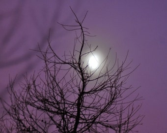 Winter Moon in Mist, misty moon photograph, violet sky, larch tree silhouette, christmas, yule image, mystical purple sky
