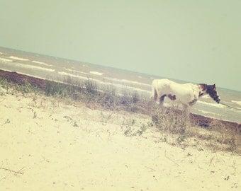Beach Horse Digital Image Download