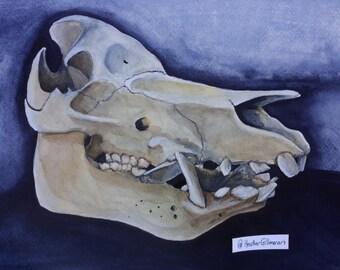 Boar Skull Original Watercolor 11 x 14