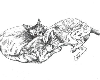 Cat illustration - original drawing -two tabby cats playing