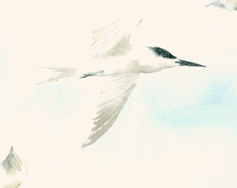 Fine Art Print from Original Watercolor Painting Sea Swallows