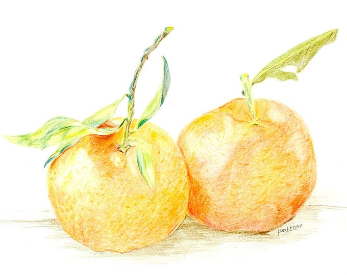 LIMITED EDITION of Orange Tangarines, Art Print of Pencil Drawing, Mandarins, Oranges, Clemetine, Beautiful Three Dimensional, Vegan Art,