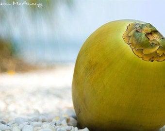 Tropical Green Coconut at Shoreline, Art Photo Print, Coastal Decor, Beach Photograph, Nature Photograph, Coconut Photograph, Nature Art