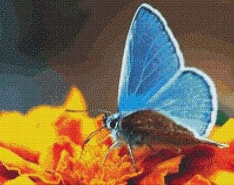 Blue Butterfly on Orange Flowers Cross Stitch Pattern Animal Series Design Instant Download PdF