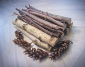 Decorative nature mix Birch and maple Logs sticks and pine cones Medium flat rate shipping