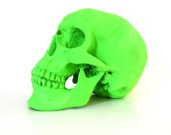 skull head, neon green, skull art, medical home decor, skulls, fluorescent, anatomy