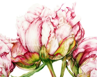 Peony Art Print, Botanical Print, Home Decor Botanical Watercolor, Peonies, Gifts For Her, Botanical Print, Botanical Illustration Wall Art