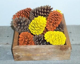 Fall Decor, Painted Pine Cones, Painted Pinecones, Fall Pine Cones, Fall Pinecones, Fall Decorations, Pine Cones, Pinecones