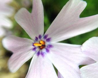 White and Purple Flower Macro Photo