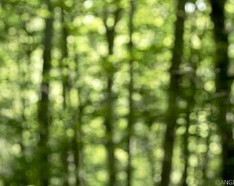 Dreamy Forest Wall Art, Summer Woods, Tree Print, In the Forest, Large Wall Art, Sunny Forest, Daydream, Summertime, Green
