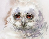 Owl painting, original watercolor bird painting