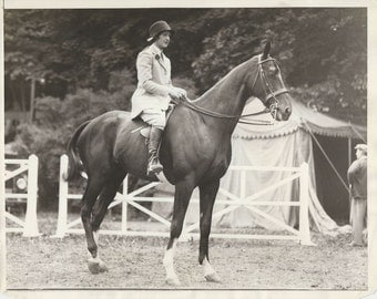 Noble Roland Naps - Vintage 1920s Equestrian and Show Horse Press Photograph