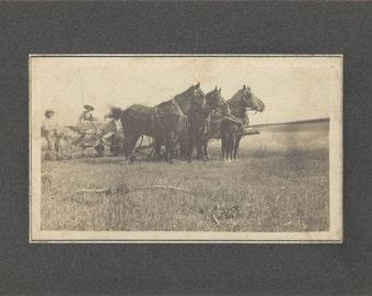 Pride of the Farm - Antique 1900s Four-Horse Team Albumen Print Cabinet Card Photograph