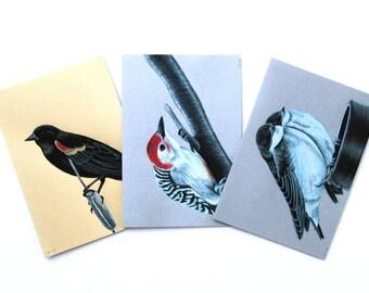 Bird Card Set With Envelopes Wildlife Card Set Blank Greeting Card Set Bird Thank You Card Fine Art Cards Boxed Notecard Set