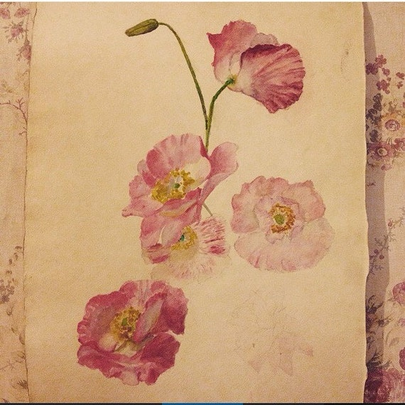 Antique Watercolor Pink Flower Painting Study Rose Shabby Chic