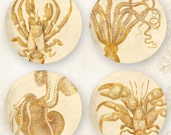 Octopus or Crustacia melamine plate