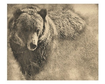 Grizzly Bear Digital Pencil Drawing on Stretched Canvas