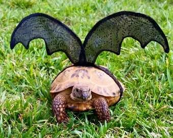 Pet Tortoise Costume, Bat Costume, Pet Costume, Tortoise Costume, Turtle Costume