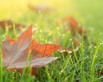 Autumn Leaves at Sunrise -  Nature Photo Print - Size 8x10, 5x7, or 4x6