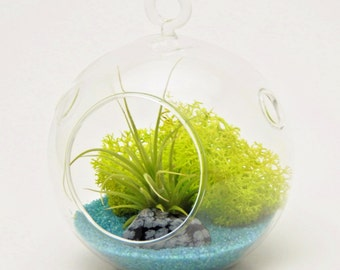 """Mini Air Plant Terrarium Kit with 3"""" Glass, Turquoise Sand, Green Moss and Snowflake Obsidian Stone / Free Shipping"""