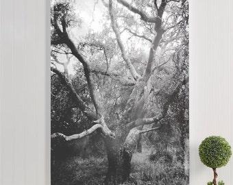 "tree canvas gallery wrap / nature forest daguerreotype style canvas print / black white large canvas wall art / ""vintage black & white oak"""