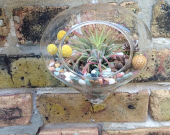 Hanging Easy Care Air Plant Terrarium - A Unique Holiday or Christmas Gift