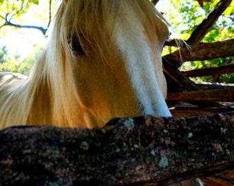 Photography- Williamsburg, Yorktown Battlefield Virginia