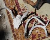 Antlers Vintage found deer bone antlers sun bleached naturally aged