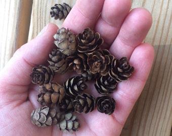 Mini Pinecones, Hemlock Tree Pinecones, 100 Pieces, Crafts, Rustic Decor, Supplies, Woodland, Rustic Wedding