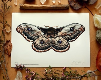 """Giclee Art Print, """"Moth"""" by Grace and the Wolf, A5, 5.83 x 8.27 inches, Somerset Photo 300gsm, original drawing"""