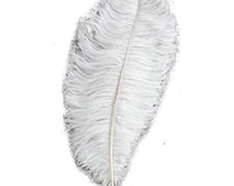 Half Pound of Ostrich Wing Plumes 18-22 Inches (approximately 50 feathers)
