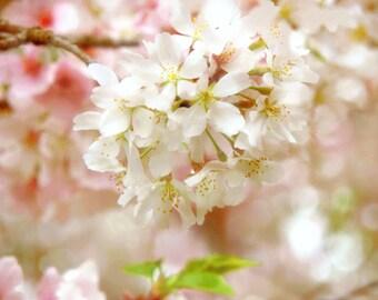 Cherry Blossom Photo Flower Photograph Shabby Chic Decor by Prchal Art Studio