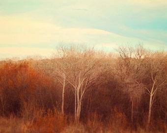 Nature Photography - Fall Photo - Sunset Print - Fall Decor - Fall Photography - Autumn Colors Print - Beautiful Decor - Tree Brown Orange