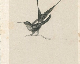 SALE Antique Original Engraved Lithograph 1800's Book Plate Print Besson Hummingbird Ornithology Bir