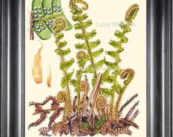Antique Fern Art Print 16 Lindman  Botanical Antique Beautiful Green Ferns Forest Nature Book Plate Picture Chart to Frame Wall Decor