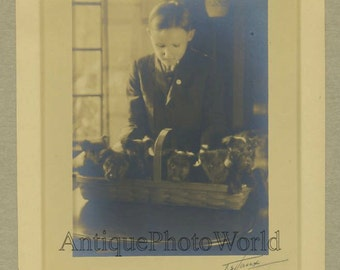 Boy with puppies dogs in basket antique art photo