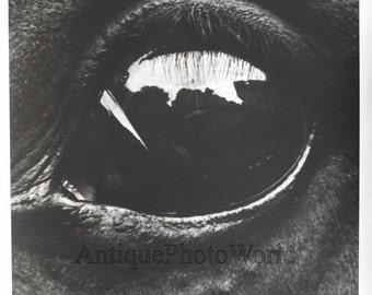 Horse's eye close up abstract art animal photo