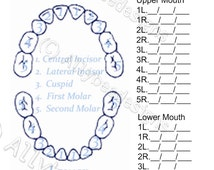 Tooth Fairy Offical Tooth Record Chart miniature sized - ACTUAL CERTIFICATE