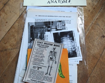 Vintage Ephemera Pack, Anatomy Images, Bodies