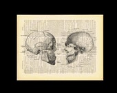 Human Skull Cross section Wall Art Anatomy Art Anatomical Skeleton Poster Vintage Dictionary Art Print 498